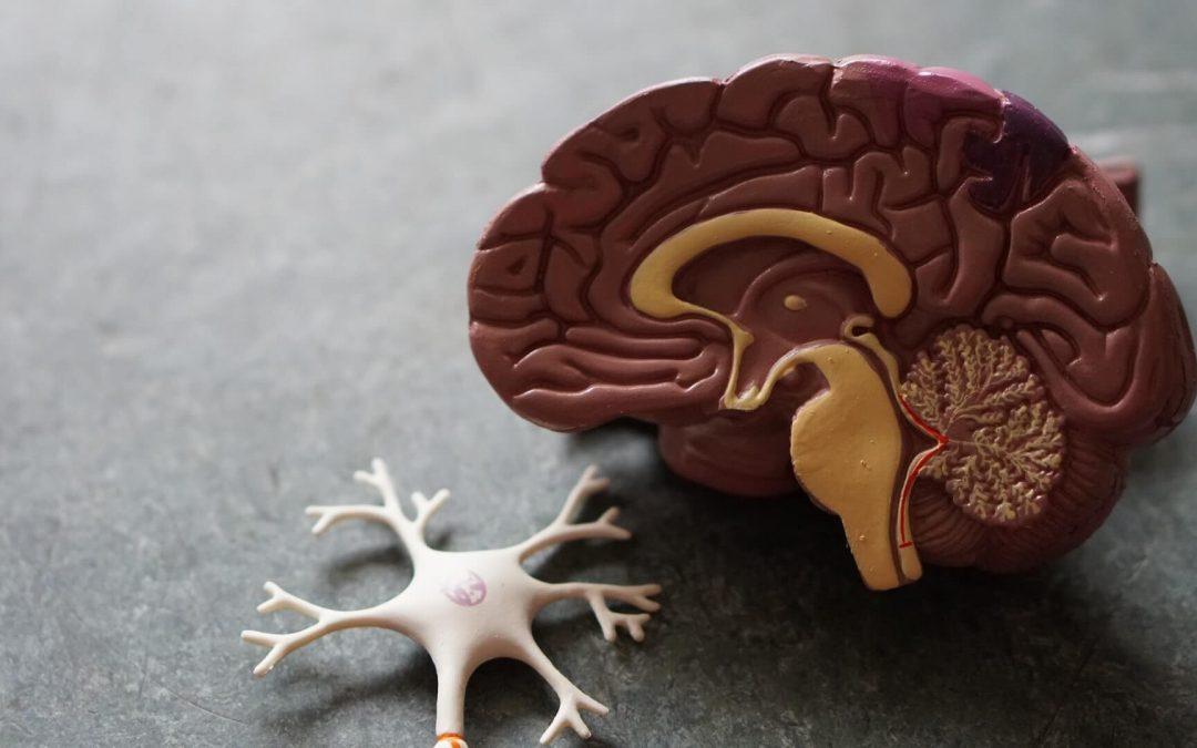 Beynimiz Nasıl Öğrenir?